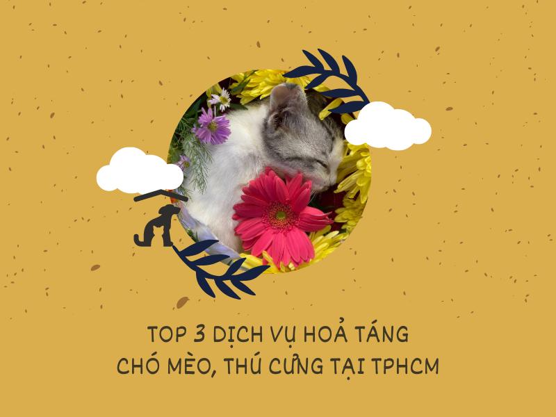 top 3 dich vu hoa tang thu cung cho meo tai tphcm