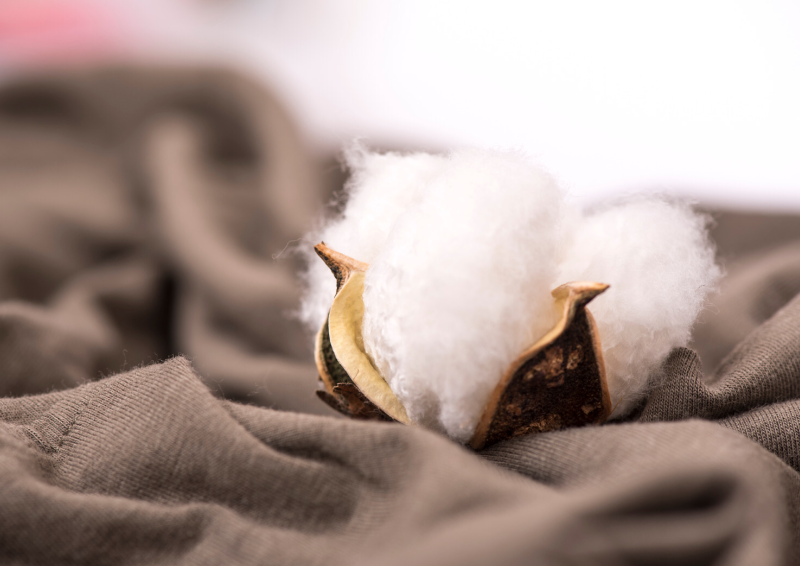 Vai cotton thuong duoc su dung trong may mac