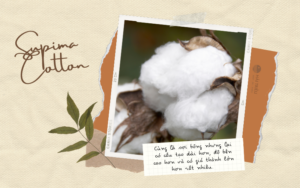 dac tinh uu nhuoc diem cua supima cotton